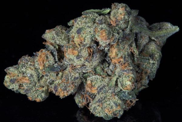 Strains The Herbal Cure Denver Premier Cannabis