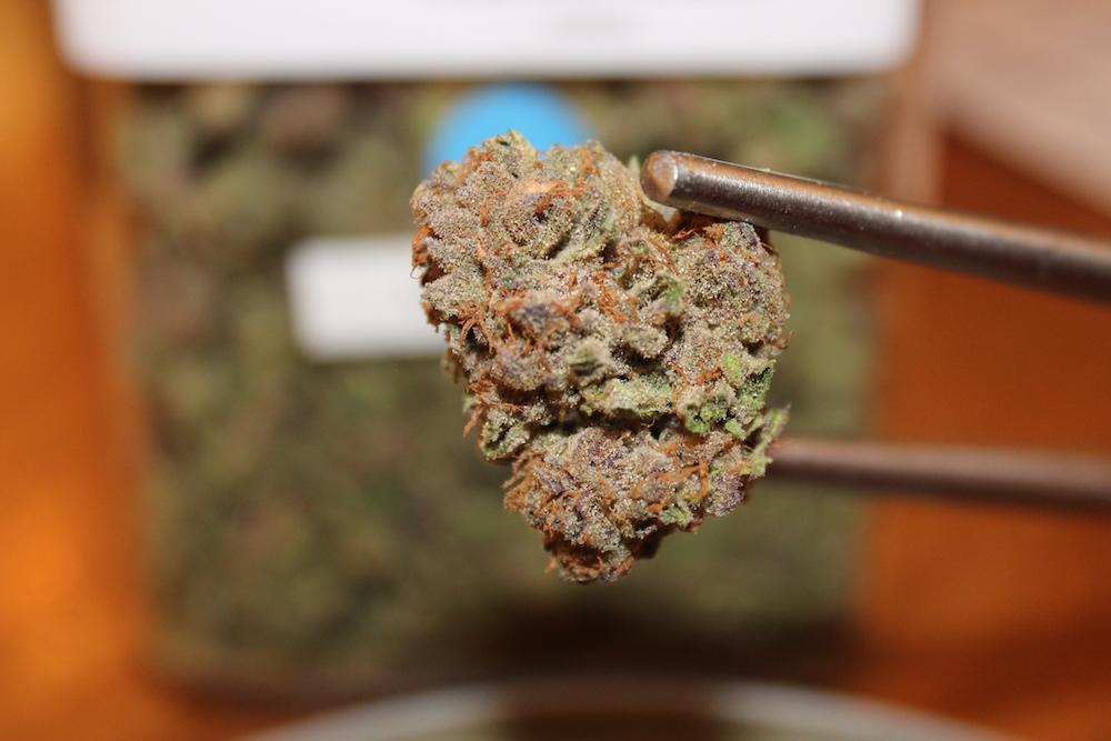 shrieker Archives - The Herbal Cure: Denver's Premier