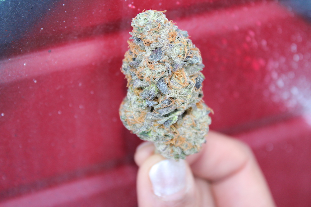 shrieker Archives - The Herbal Cure: Denver's Premier Cannabis