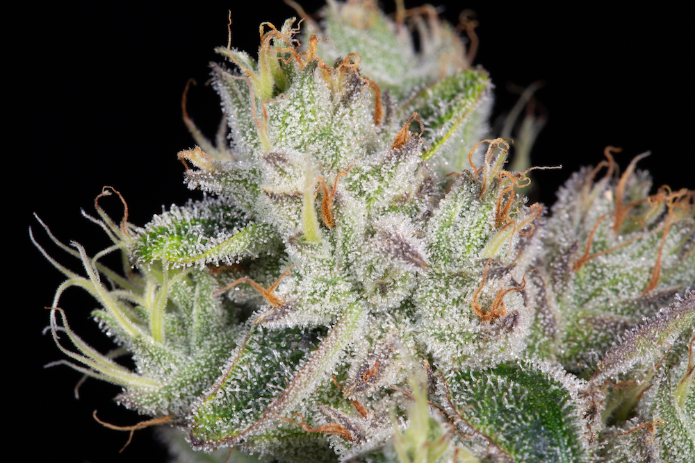 The Herbal Cure: Denver's Premier Dispensary Carrying the